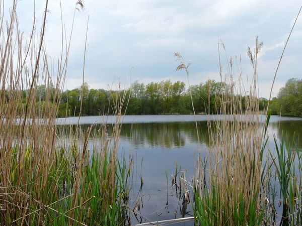 Reflection Nature Water Lake Tree Sky Growth Reed - Grass Family Somerset Levels Uk Nature On Your Doorstep Nature Reserve Nature Wetland