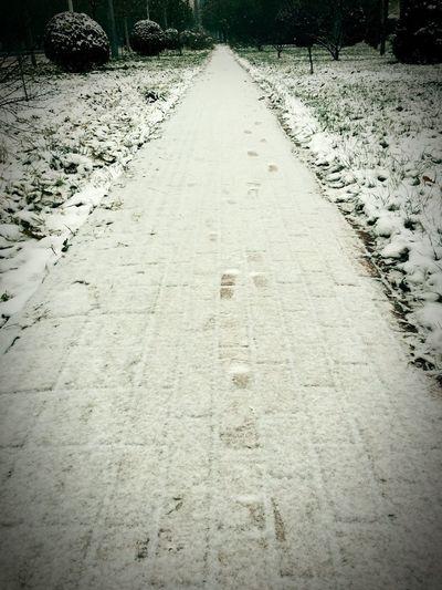 Snow 雪 By Lemonni