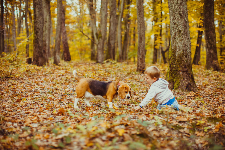 View of dog in forest during autumn