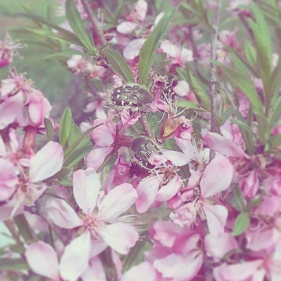 Школьный двор. Единственное, что заслужило внимания. багульник цветы растения весна Природа Школа Flowers Nature Spring Plants School