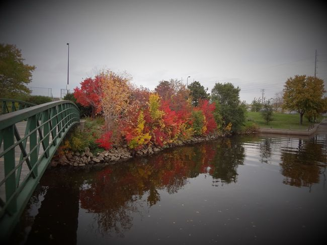 Boom Island, Northeast Minneapolis, MN. Bridge Day Fall Colors Fall Leaves Flower Multi Colored Nature No People Outdoors Reflection Sky Tabphotography Tree Water Water Reflection