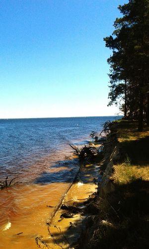 Sukholuch'ye Kiev Sea Lake Lake View Trees Tree In The Water Ukraine