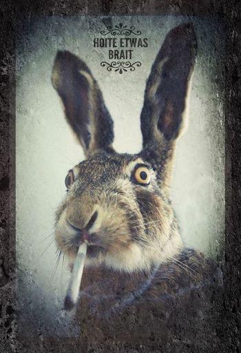 ArtWork BreakOutArt Stoner Rabbit Rework