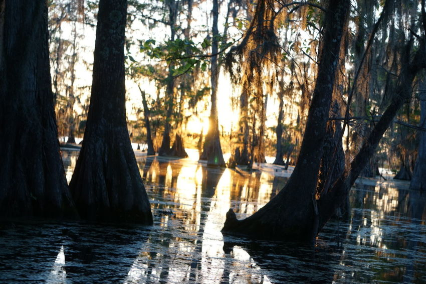 Sunset in the swamp. Tree Nature Sunset Reflection Water Tree Trunk Sunlight Scenics No People Tranquil Scene Beauty In Nature Sky Branch Outdoors Sony A6000 Traveling Texan Louisiana Nature Photography Travel Photography Noedit Nofilter Raw Image