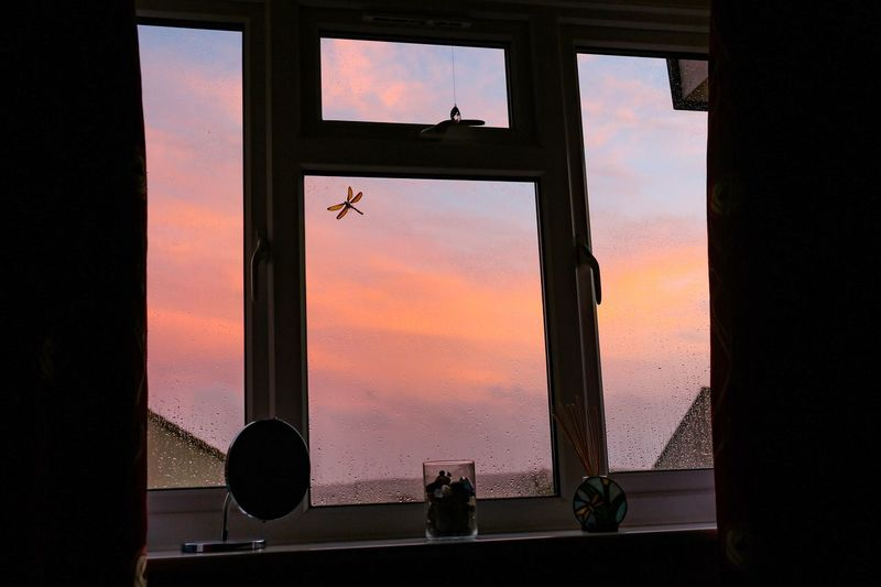 The sky heard all the complaints so the clouds pushed the rain out of the way and sunset had the last word. Sunset Rain On The Window Pink Flower Sky Sunset Indoors  Window Glass - Material Nature Water Silhouette Architecture No People Built Structure Transparent Cloud - Sky Orange Color