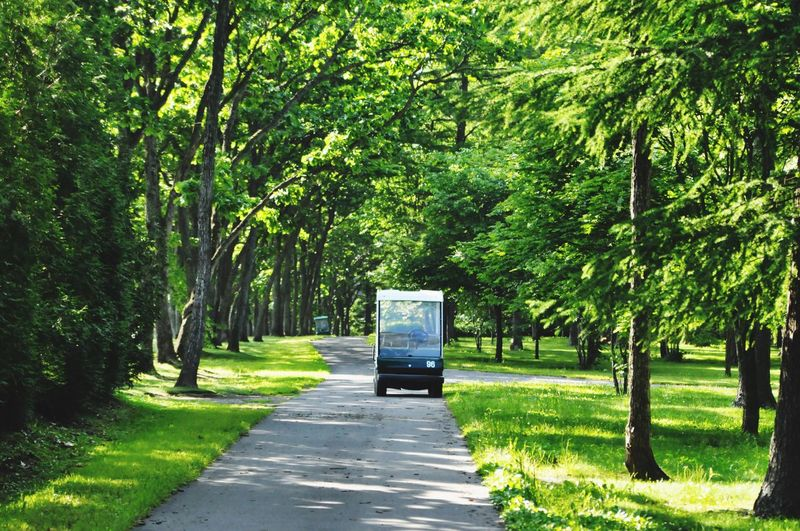 Car Travel Travel Destinations Green Color Tree Transportation Road Land Vehicle Green Color Branch Day Nature