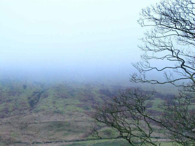 Tree Fog Nature Landscape Beauty In Nature Awe Outdoors Forest Social Issues Tranquility Sky No People Branch Day Pendle Hill Witchespath Eyeemphotography Eerie Beautiful EyeEmbestshots Eye Em Nature Lover Fine Art Photograhy Witchcraft  Hills Frosty Days Foggy Day
