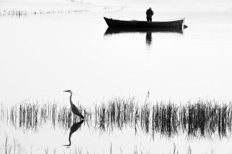 A heron and a fisherman are fishing on the lake. Water Nautical Vessel Lake Nature Transportation Reflection Waterfront Mode Of Transportation Day Tranquility Animal Themes Animal Bird Tranquil Scene Beauty In Nature Plant Grass Vertebrate Scenics - Nature Outdoors Fisherman Heron Fishing Black And White Black & White