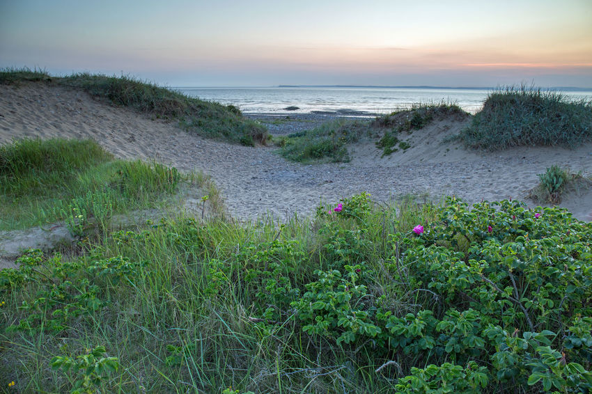 Sand Bay Somerset England Vacations Beach Beauty In Nature Dusk Environment Grass Growth Horizon Over Water Land Marram Grass Nature No People Outdoors Plant Sand Dunes Scenics - Nature Sea Sky Sunset Tranquil Scene Tranquility Uk Water