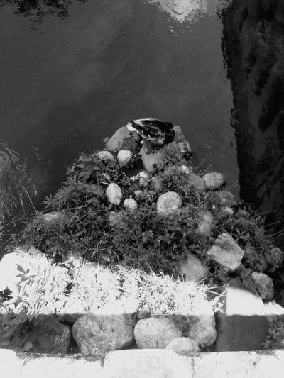 Solocosebelle Trevisocity Treviso Bianco&nero Hello World Black And White Photography Blackandwhite Paperella Fiume Passeggiando Per Le Vie Del Centro Passeggiando