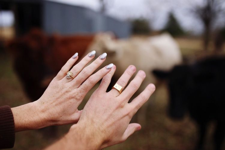Cropped Hands Of Couple With Rings Against Cows