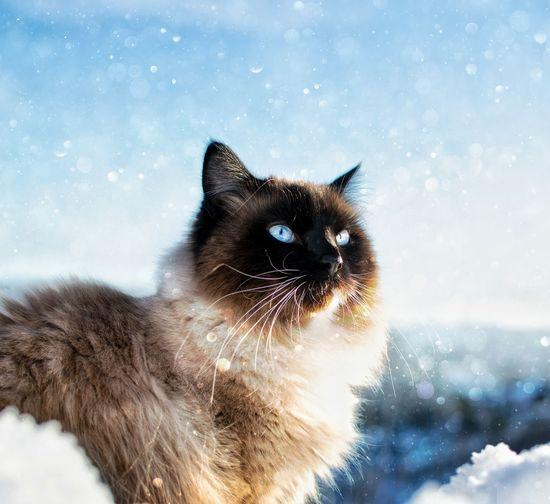 Portrait of cat in snow
