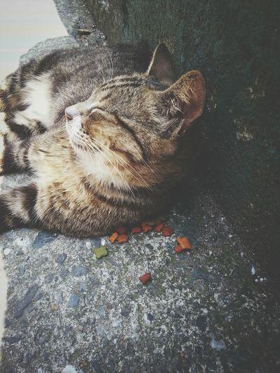 Hello . I am back! Cat Winze's Life