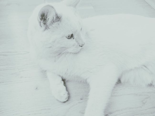 Thecat Cat White Foggy Taking Photos Relaxing Hanging Out Creative Light And Shadow Faded Fade Away B&w Street Photography My Best Photo 2015 Cats Light And Shadow Adventure Buddies Pastel Power Learn & Shoot: Balancing Elements Here Belongs To Me Showing Imperfection Telling Stories Differently Color Palette