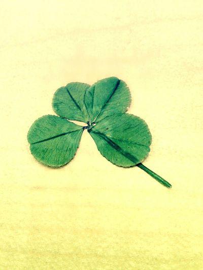 Trebol De Cuatro Hojas Green Color