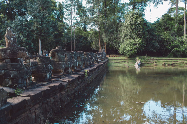 Siem Reap Cambodia Angkor Tree Plant Nature Water Day Animals In The Wild Bird No People Reflection Animal Wildlife Forest Vertebrate Animal Themes Animal Lake Tranquility Group Of Animals Outdoors Growth