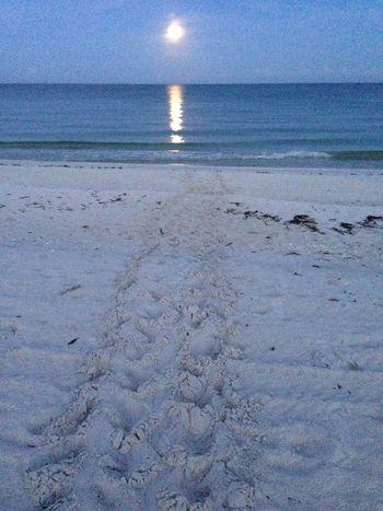 Vanderbilt Beach sea turtle tracks into the moonlight - Naples, Florida by iPhone Naples Naplesflorida Sand Sea Turtle Tortoise IPS2016Composition