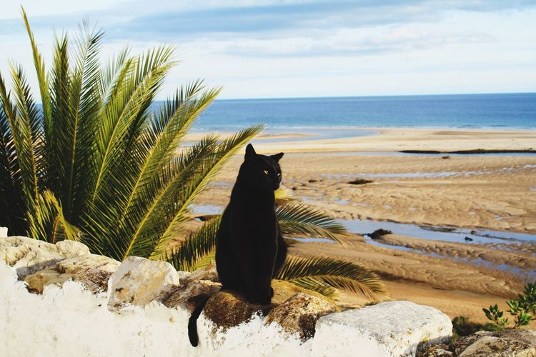 Black cat on wall against beach