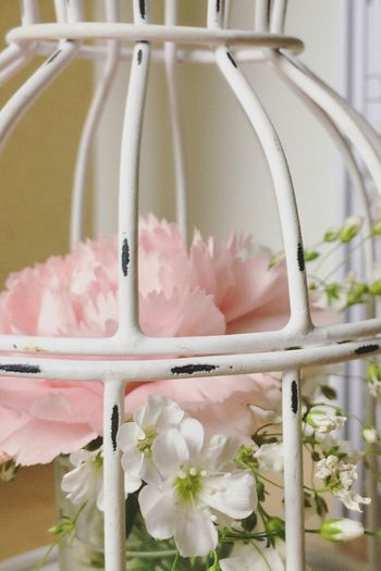 Flowers in a Flower Growth Fragility Freshness Close-up Wedding Photography Bride Decoration Event White Vintage Bridesmaid Groom Marriage  Event Decor Amenities Quiet Saturday Floral Stylist No People Nature Flower Head Plant Indoors  Day Cage