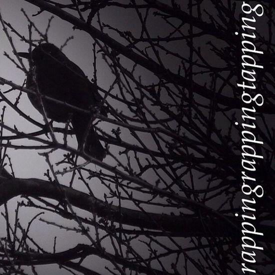 The Raven Edgar Allan Poe Monochrome Halloween Horrors