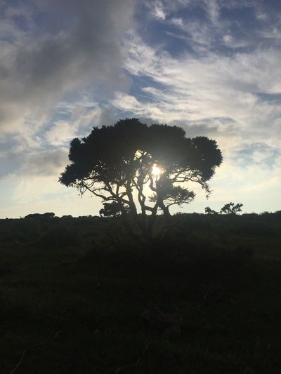 Tree enlightenment Sky Tree Plant Cloud - Sky Silhouette Tranquility Nature Beauty In Nature Field