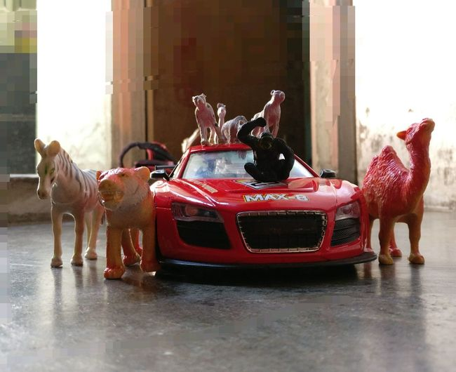 Animals Posing Car R8 😉 I One Plus 3