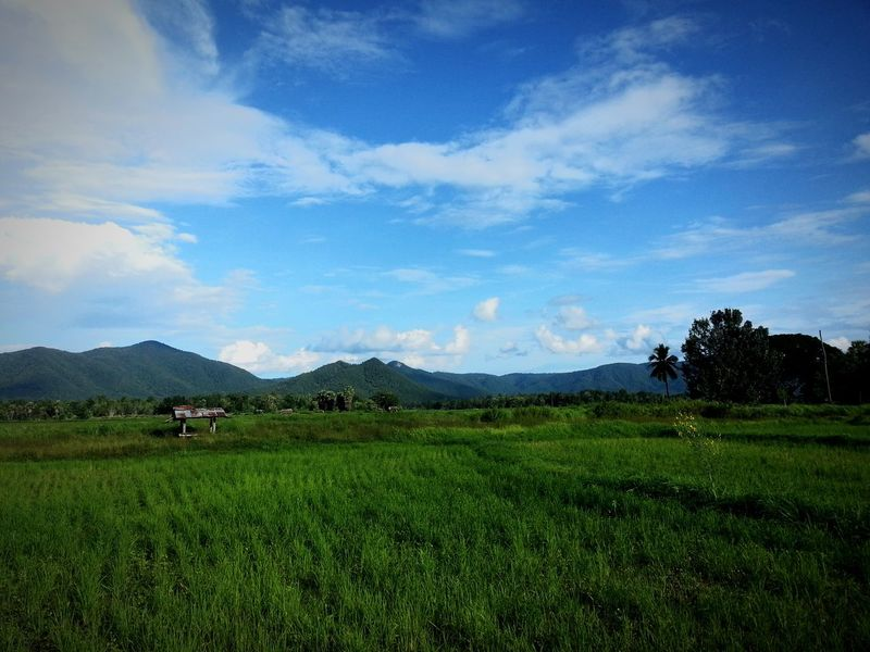 Agriculture Farm Field Crop  Tea Crop Cloud - Sky Rural Scene Green Tea Growth Nature Sky Beauty In Nature Irrigation Equipment Occupation Mountain Business Finance And Industry Working Asian Style Conical Hat Outdoors No People Lampang | Thailand