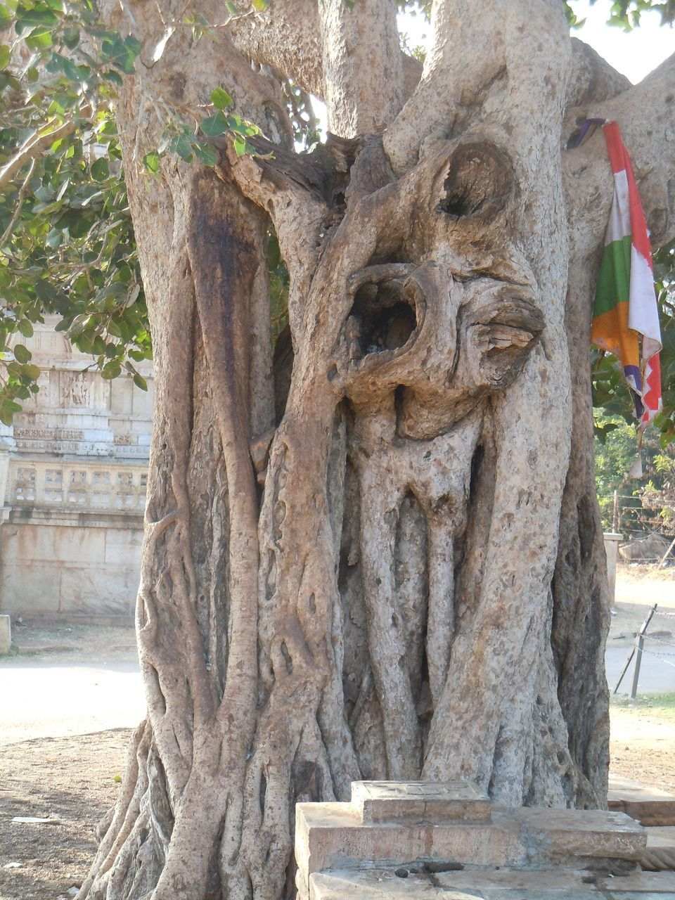 tree, day, tree trunk, no people, sunlight, outdoors, sculpture, statue, close-up, nature