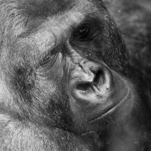 I'm Fine Thanks For Not Asking Nothing Really Matters AT THE ZOO Monochrome Monochrome_Monday Black And White