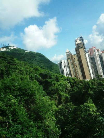 Taking Photos HongKong Photography Enjoying The Sights No Filter, No Edit, Just Photography On A Stroll Hello World Relaxing Enjoying Life Taking Photos Check This Out Hanging Out View Nature Plant Trees Green Natural Beauty