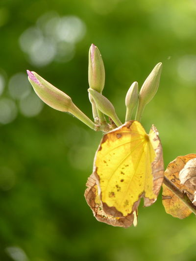 Plant Close-up Yellow Focus On Foreground Leaf Beauty In Nature Plant Part Growth Nature No People Fragility Vulnerability  Flower Day Green Color Freshness Flowering Plant Bud Outdoors Tranquility Change Flower Head Leaves Aleq