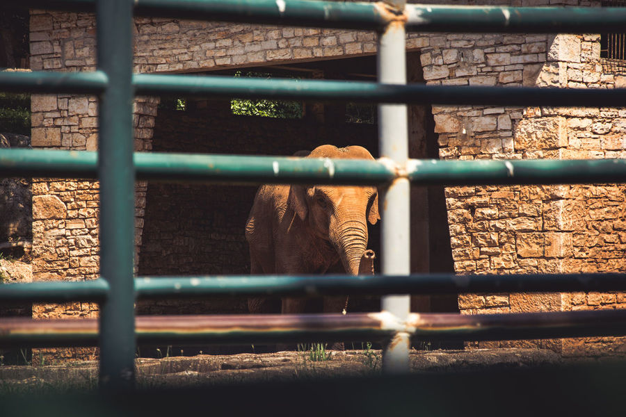 Animal Themes Animals In Captivity Animals In The Wild Cage Day Domestic Animals Elefant Field Focus On Background Kerber Livestock Mammal Nature No People One Animal Outdoors Sunlight Zoo Zoo Zoo Animals  Zoology