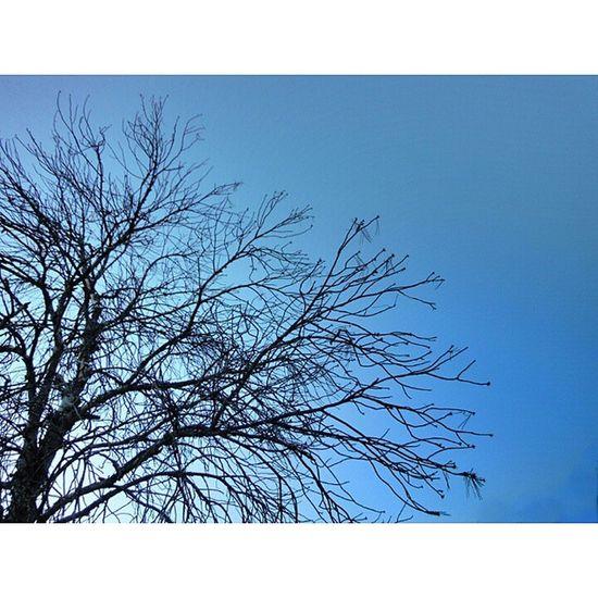 Sequía estival / Summer drought Sèquia Drought árbol Tree Ramas Branches Muerte Death