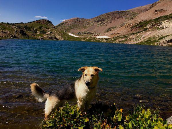 Sundog and Alpine Lake: Pet Portraits Blue Water Alpine Mountain Dogslife Dog Shepsky