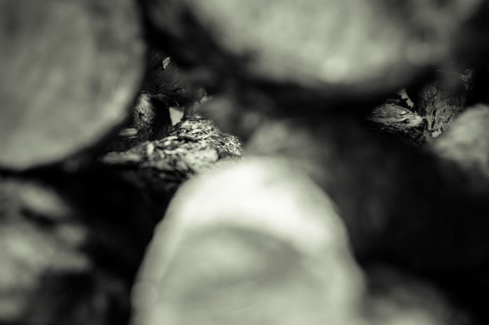 Canon 70d Close-up Cuted Tree Discovering Forest Forestwalk Monochrome Photography Nature Outdoors Prime Lens Selective Focus Trees Wood Wood - Material