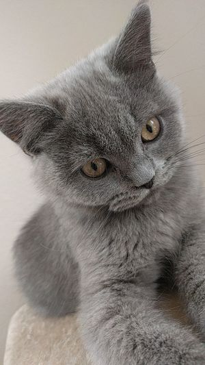 Cat♡ Cat Lovers Omg Omg *_* *.* Check This Out WOW Cute Hanging Out Pet Portraits