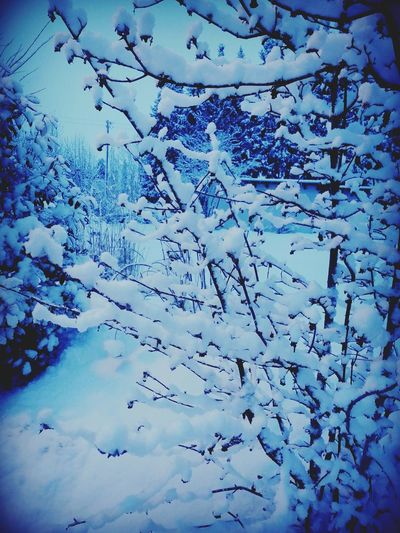 Snow Feeling Inspired Cold Winter ❄⛄