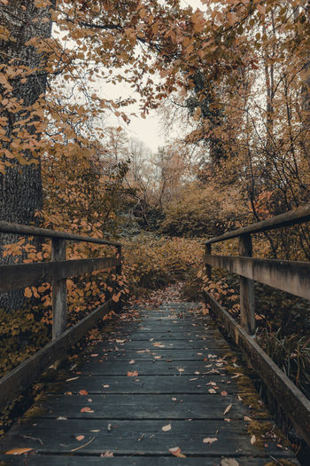Footbridge amidst trees in forest during autumn