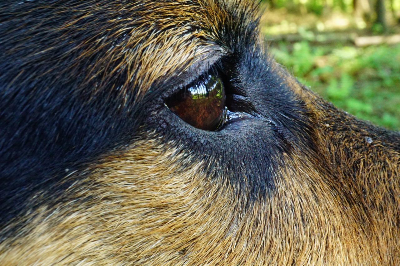 one animal, mammal, animal themes, close-up, domestic animals, animal hair, no people, animal wildlife, outdoors, nature, day, pets