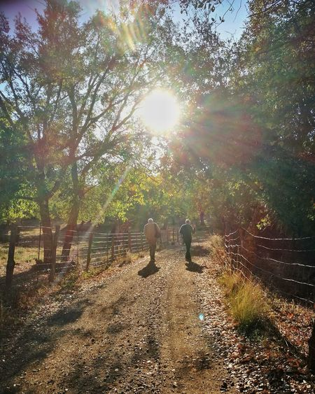 Autumn walk Sunlight Tree Nature Outdoors Day Tranquility Beauty In Nature Sky Against The Light Tadaa Community Capture The Moment Enjoying Life Eye4photography  EyeEm Selects SierradeAracena Autumn Sunbeam Refraction Everyday Joy Andalusia SPAIN Walking Hiking Two People Fuenteheridos