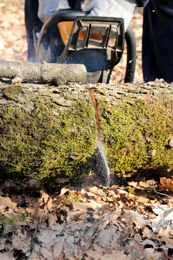 Branch Chainsaw Cut EyeEm Gallery Occupation Tree Tree Trunk Trunk Trunk Detail Trunk Tree Trunkofwood Wood Wood - Material Woodman Work Work In The Woods