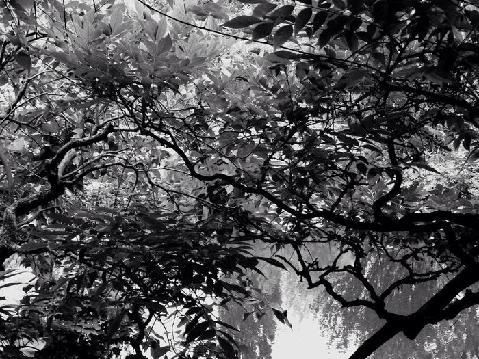 Trees And Sky Water_collection Summer France 🇫🇷 Giverny Monet Garden Nature Hello World IPhoneography Eye4photography  2016 IPhone