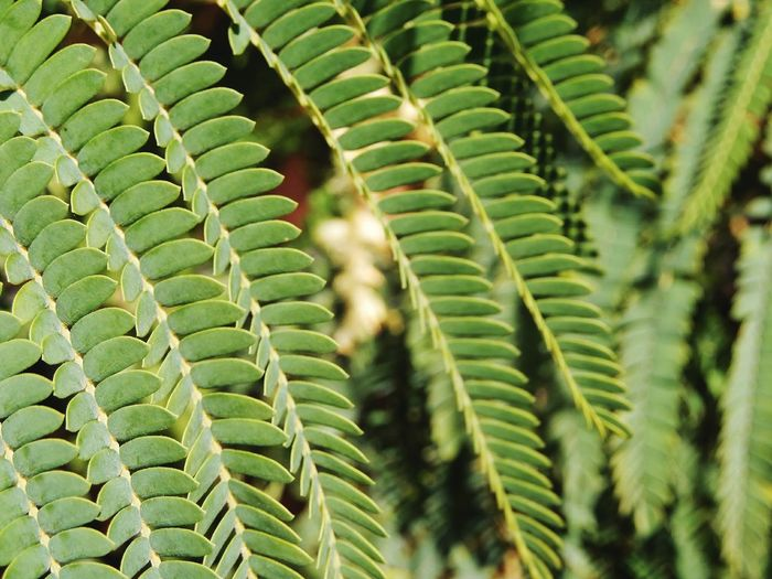can I hide behind the green? 🌿 Green Green Nature Calm Plant Part Leaf Fern Frond Close-up Plant Green Color Natural Pattern Plant Life Botany Focus