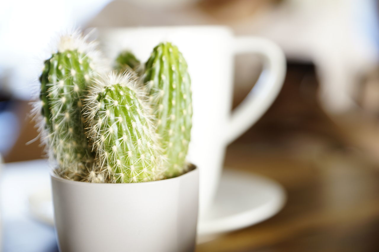 green color, close-up, table, indoors, food and drink, freshness, focus on foreground, no people, growth, plant, nature, day