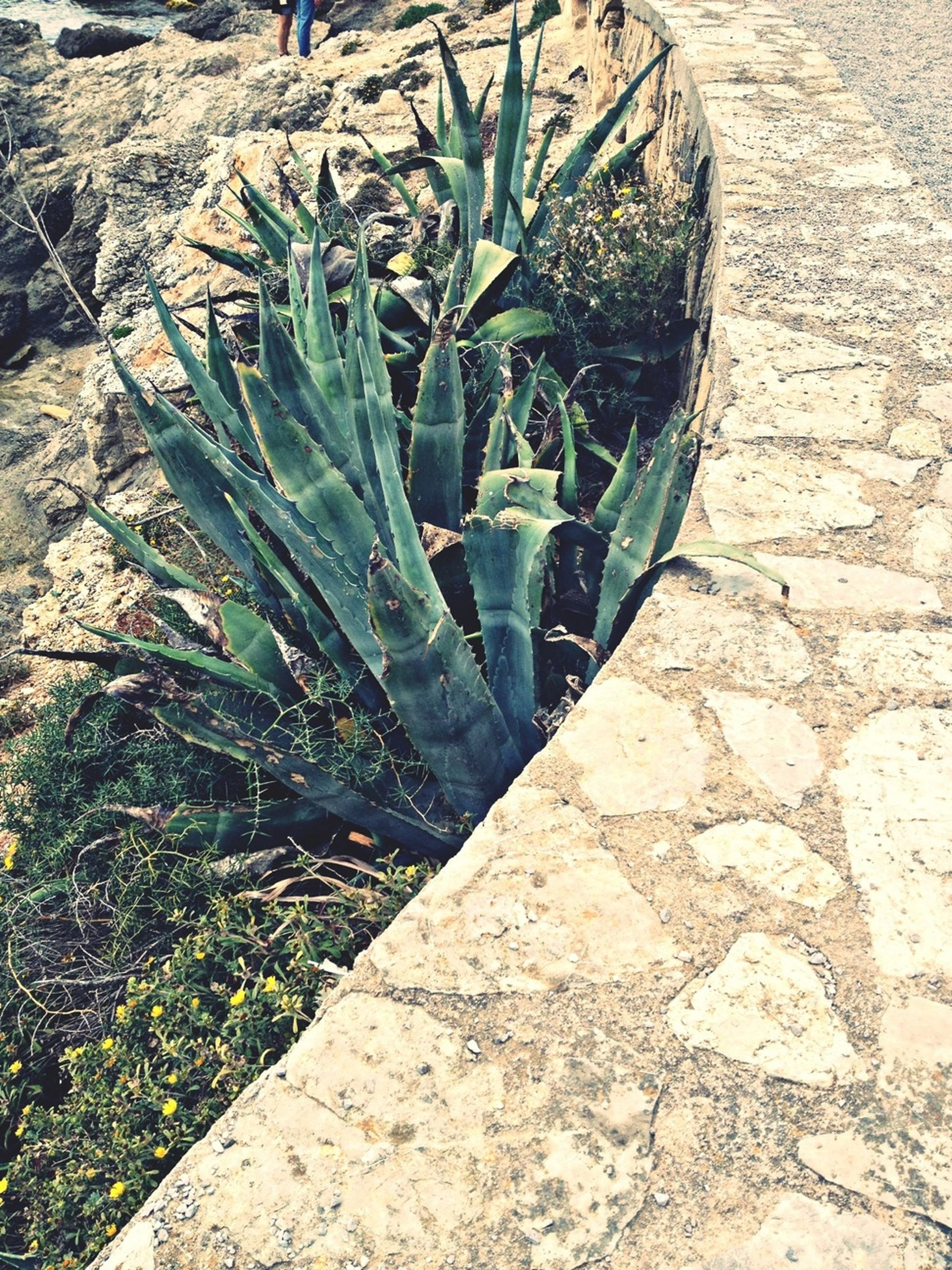 high angle view, plant, outdoors, sunlight, growth, day, close-up, nature, rock - object, no people, shadow, textured, stone - object, field, leaf, old, pattern, grass, ground, stone wall