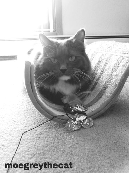 A little play Catloversworld Check This Out Catslover Blackandwhite Photography Shades Of Grey Taking Photos Catsofinstagram Petlover CatLadyForlife Relaxing