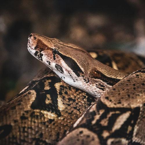 Full frame shot of snake