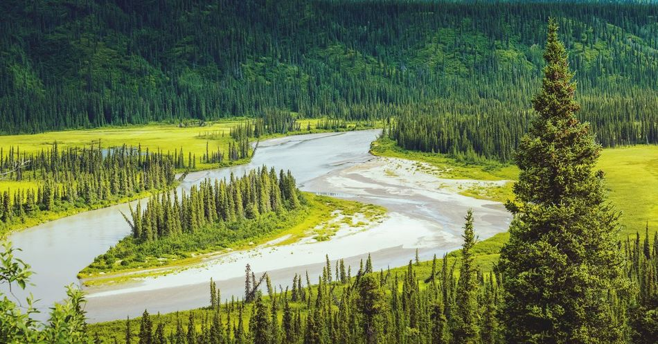 EyeEm Selects Rural Scene Nature Scenics Landscape Tree No People Green Color Beauty In Nature Day Outdoors Samyang 50mm 1.4 Alaska Trip Summer Sony6500 Samyang Fragility Beauty In Nature Sonyalpha6500 Panoramic Dempster Highway