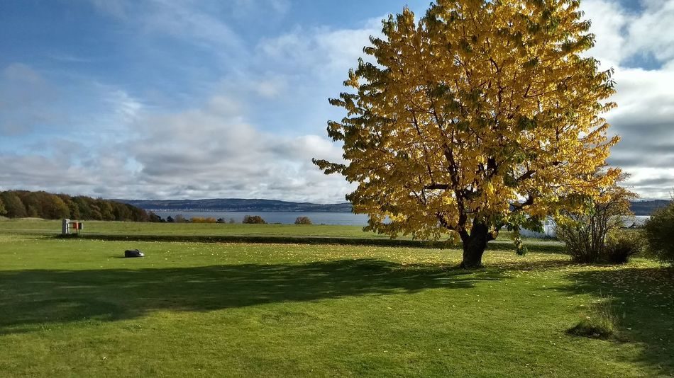 Tree Nature Beauty In Nature Scenics Landscape Outdoors In My Garden Amazing View Lake View Cherry Tree