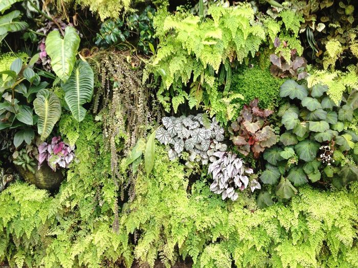 Green, Nature